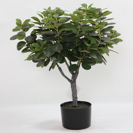 Rubberized Single ball east  ficus  with plasic pot