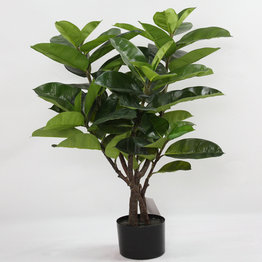 Rubberized Rubber Tree with plasic pot
