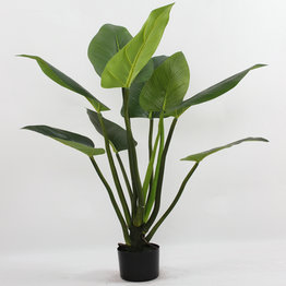 90CM Rubberized Curcuma with plasic pot