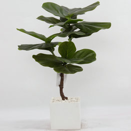 80CM Rubberized Fiddle Tree with plasic pot